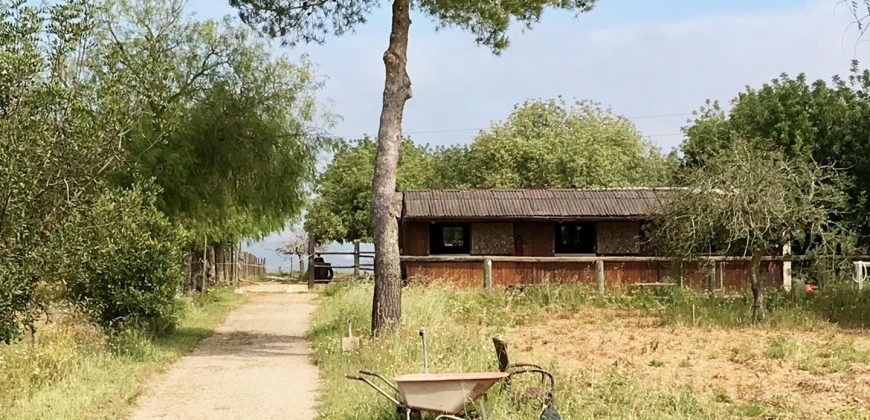 Rustic House in Sencelles