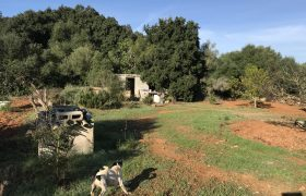Rustic Plot in Algaida