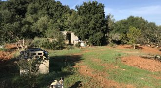 Rustic Plot in Algaida
